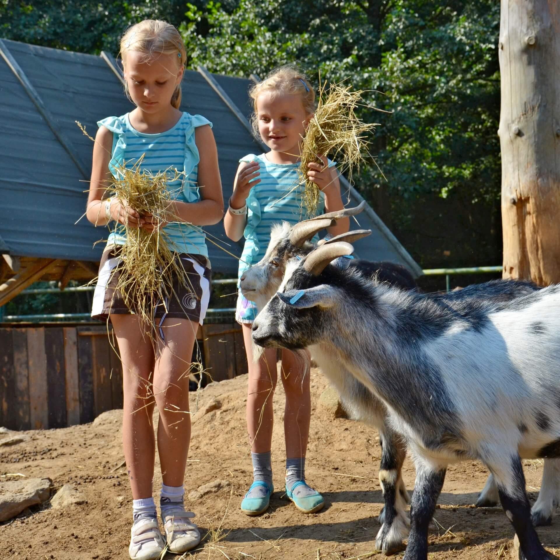 Krmení zvířátek v zoo parku.